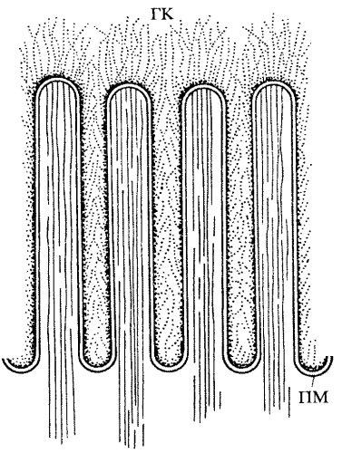 плазматической мембраны