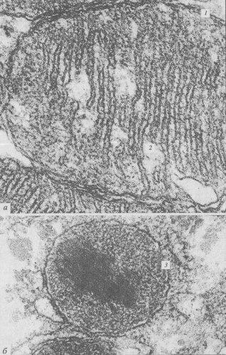 электронного микроскопа