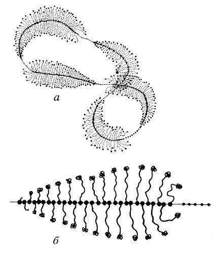 ооцита жука-плавунца (а) и